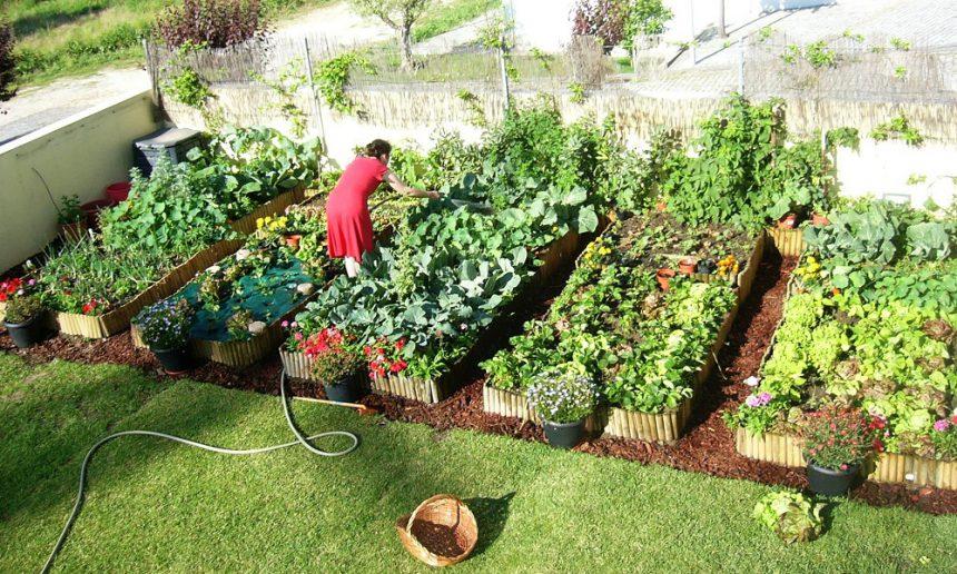 A horta orgânica