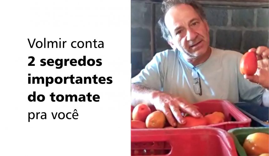 Volmir conta 2 segredos importantes do tomate pra você